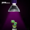 led grow lamp for indoor plants