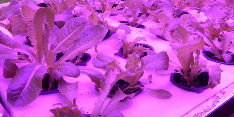 why use led grow light strips